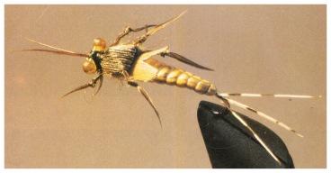 Cette imitation d'une larve plate est plus vrai que Nature !